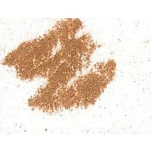 Pastel Block Brown Ochre Full Strength 57b - Derwent -