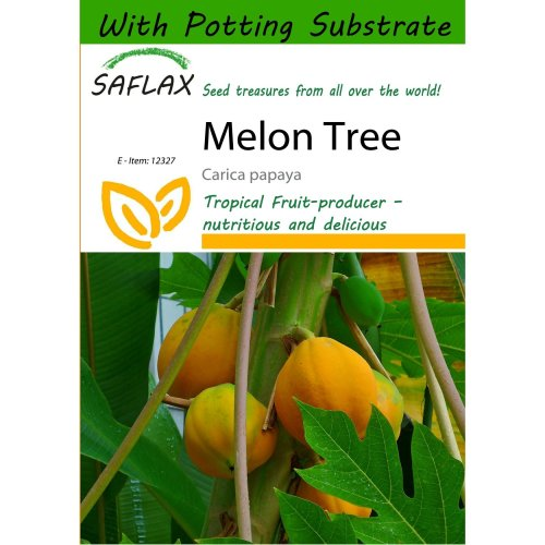 Saflax  - Melon Tree - Carica Papaya - 30 Seeds - with Potting Substrate for Better Cultivation