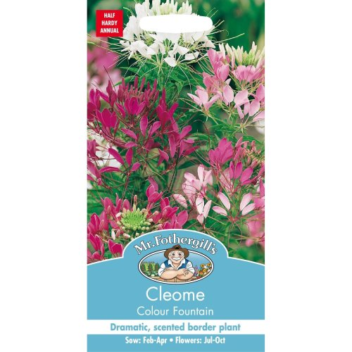 Mr Fothergills - Pictorial Packet - Flower - Cleome Colour Fountain - 250 Seeds