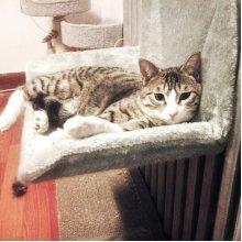 Cat  Bed Chair Ultra Portable Warm Fleece Beds Basket Cradle Hammock Animal Puppy Pet