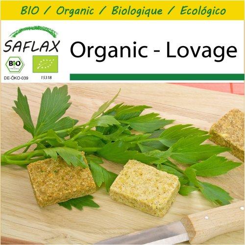 SAFLAX Potting Set - Organic - Lovage - 100 certified organic seeds  - Levisticum