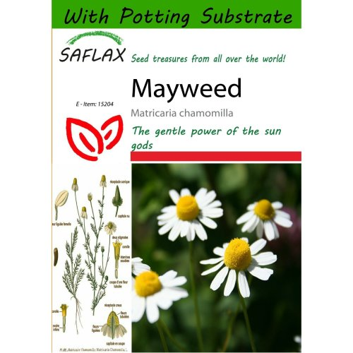 Saflax  - Mayweed - Matricaria Chamomilla - 300 Seeds - with Potting Substrate for Better Cultivation