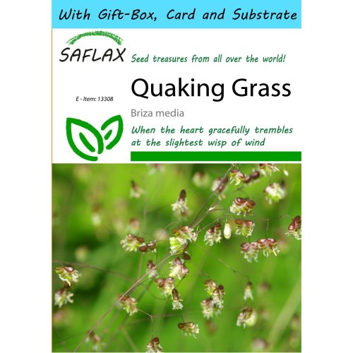 SAFLAX Gift Set - Quaking Grass - Briza media - 75 seeds - With gift box, card, label and potting substrate