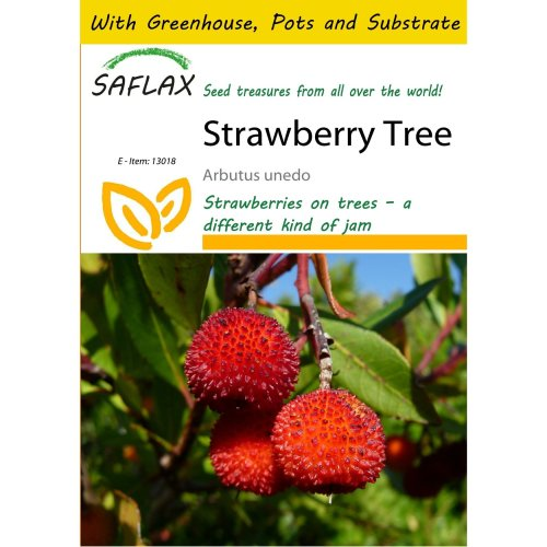 Saflax Potting Set - Strawberry Tree - Arbutus Unedo - 50 Seeds - with Mini Greenhouse, Potting Substrate and 2 Pots