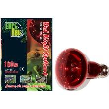 Red Night 100w Spotlamp Screw Fit