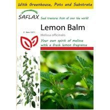 Saflax Potting Set - Lemon Balm - Melissa Officinalis - 150 Seeds - with Mini Greenhouse, Potting Substrate and 2 Pots