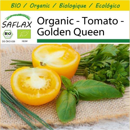 SAFLAX Potting Set - Organic - Tomato - Golden Queen - 15 certified organic seeds  - Solanum