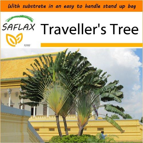 SAFLAX Garden in the Bag - Traveller's Tree - Ravenala - 8 seeds
