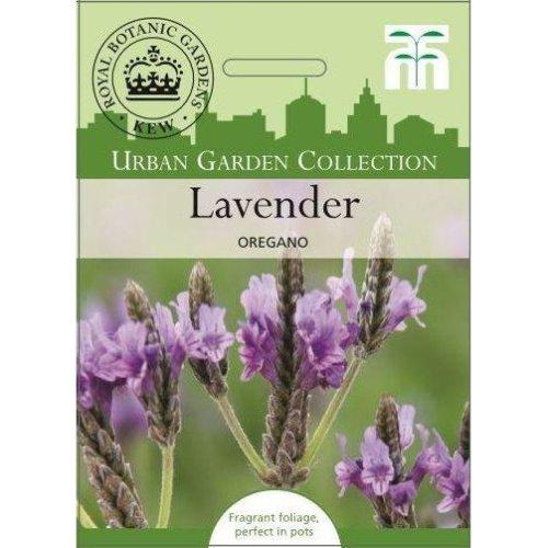 Thompson & Morgan - Urban Garden Flowers - Lavender Multifida Oregano - 100 Seed