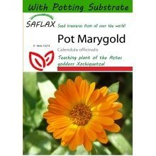 Saflax  - Pot Marygold - Calendula Officinalis - 50 Seeds - with Potting Substrate for Better Cultivation