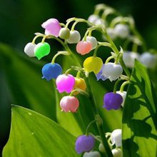 Egrow 50PCS Rare Lily of Valley Flower Seeds