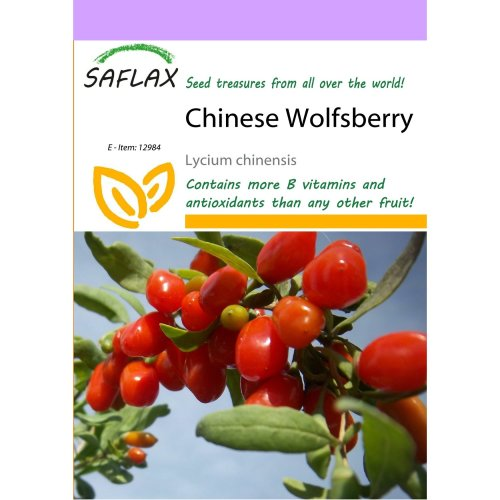Saflax  - Chinese Wolfsberry - Lycium Chinensis - 200 Seeds