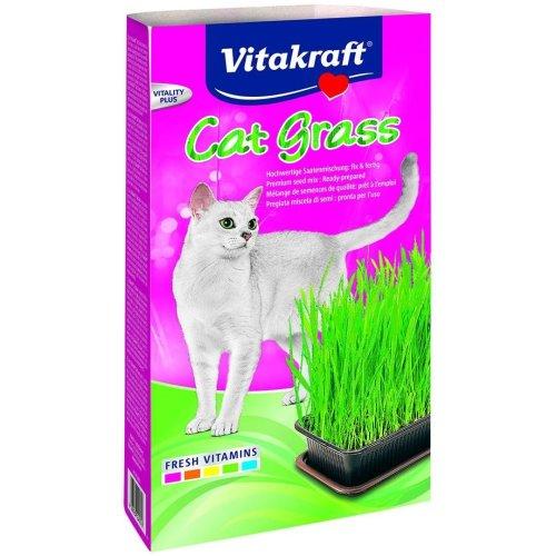 V/k Cat Grass 24031